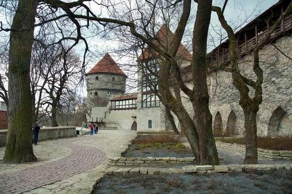 Maiden Tower in Tallinn, Estonia (photo)