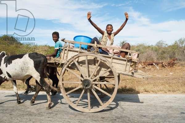 People on A Bullock Cart Near Antsokay, Toliara Province, Madagascar (photo)
