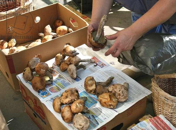 Mushrooms For Sale In A Street In Moscow : Mushrooms for sale in a street in Moscow, Russia, 22/08/11 ©ITAR-TASS/UIG/Leemage