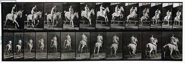 Time-lapse photographs of a rider taking a horse over a jump, 1872-1885