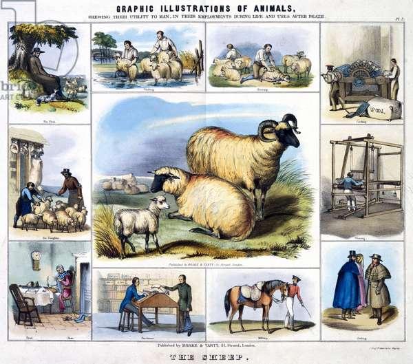 The Sheep', c 1845