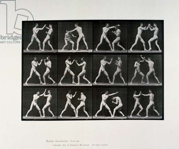 Nude male athletes boxing, c 1872-1885