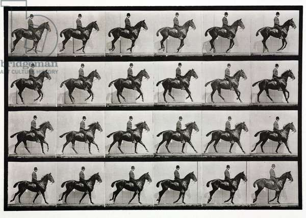 Time-lapse photographs a man on a trotting horse, 1872-1885