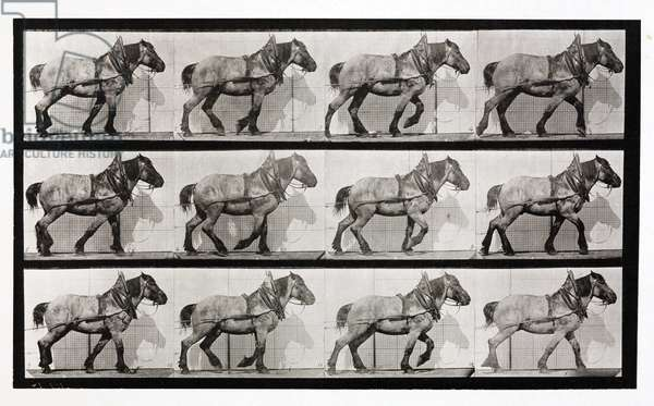 Time-lapse photographs of a cart-horse walking, 1872-1885