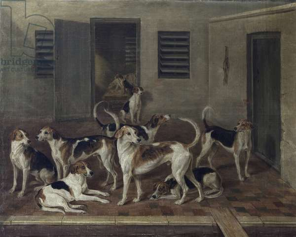 Foxhounds in Kennels