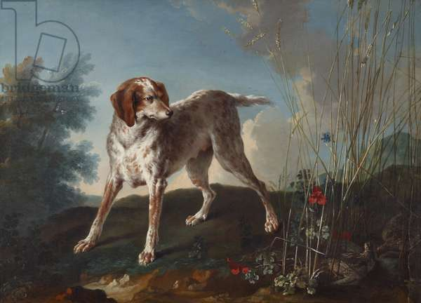 A Pointer and Partridges