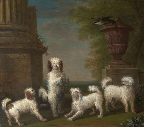 Dancing Dogs: 'Lusette', 'Madore', 'Rosette' and 'Moucheby'