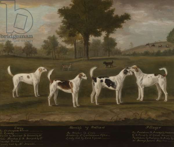 Two Couples of Foxhounds in a Park Landscape with two Terriers