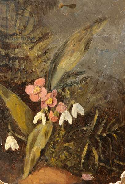 Still Life of Snowdrops, Helibore and Fern (oil on millboard)