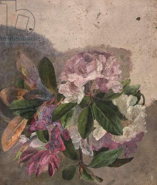 Flower Study (Rhododrendron) (oil on canvas)
