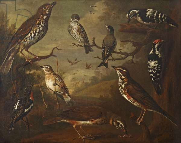 British Birds: Cock Redwing; Hen Redwing; Cock Winchat; Hen Winchat; Cock Aberderine; Cock Small Spotted Woodpecker; Hen Small Spotted Woodpecker; Cock Davis