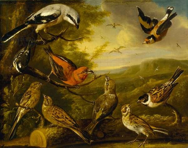 Bird painting, 1736 (oil on canvas)