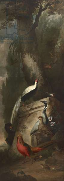 Red, Gold and Silver Pheasants and a Crane
