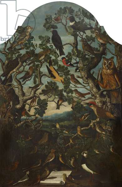 Birds of Britain (Concert of Song Birds in Two Trees, watched by an Owl)