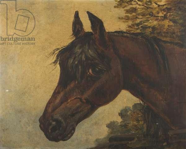 Soulful Bay Horse's Head