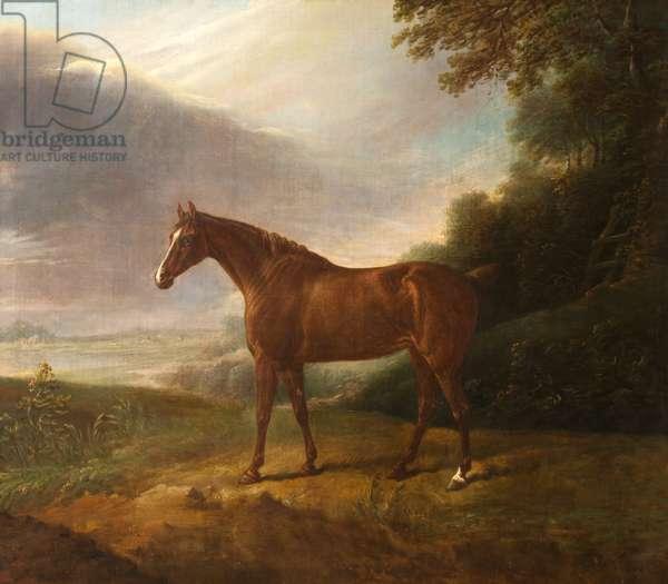A Horse called 'White Sorrel', in a Landscape