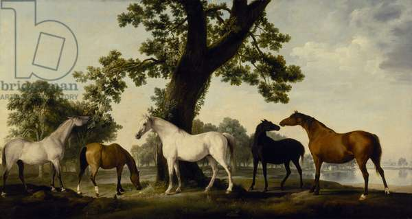 Five Brood Mares (oil on canvas)