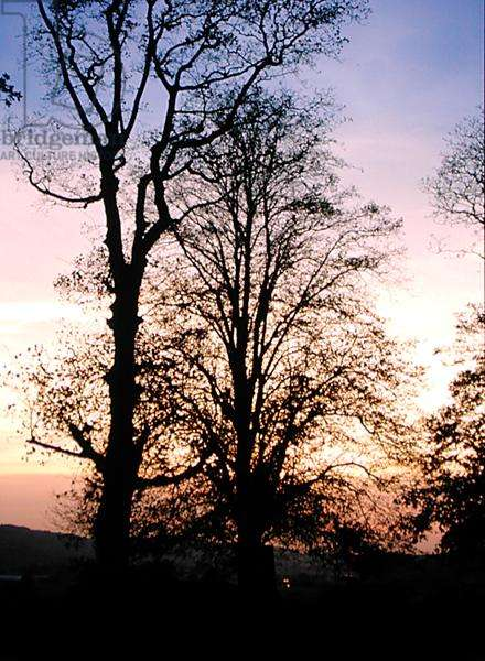 A silhouette of trees (photo)