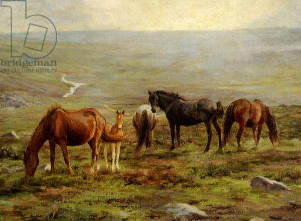 Horses grazing on Moorland (oil on canvas)