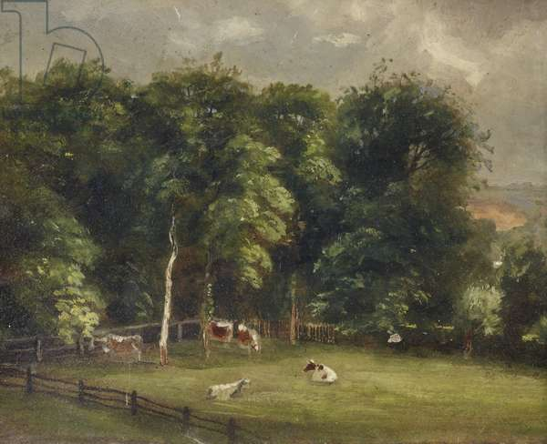 Cows in a Wooded Paddock