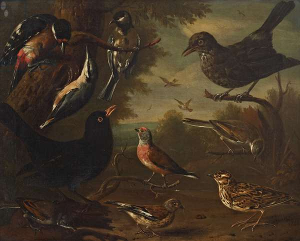 British Birds: Hen Blackbird; Great Tit; Nuthatch; Great Spotted Woodpecker; Cock Whitethroat; Cock Linnet; Cock Blackbird; Woodlark; Hen Linnet and a Hen Whitethroat