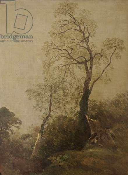 Birches in Helmingham Park (?)