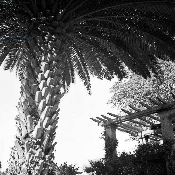 Loggia with palm tree at Mainau island, Germany 1930s (b/w photo)