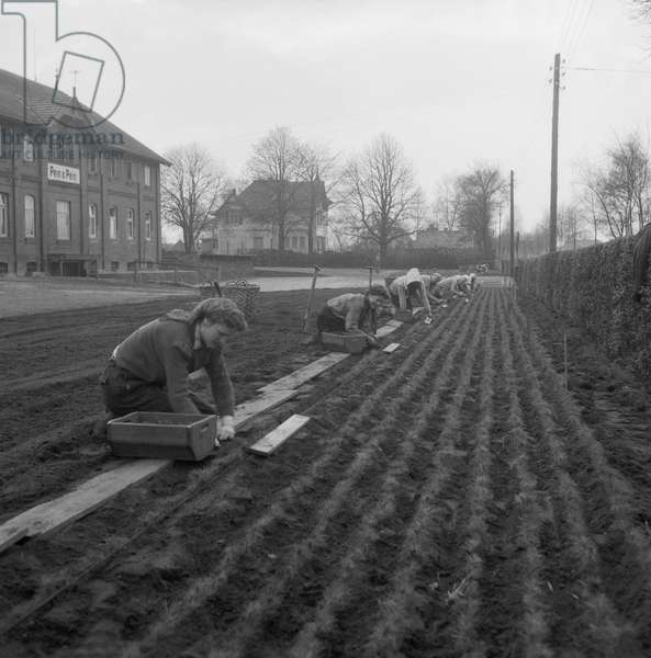 Women planting flowers at garden center Pein near Hamburg, Germany 1956