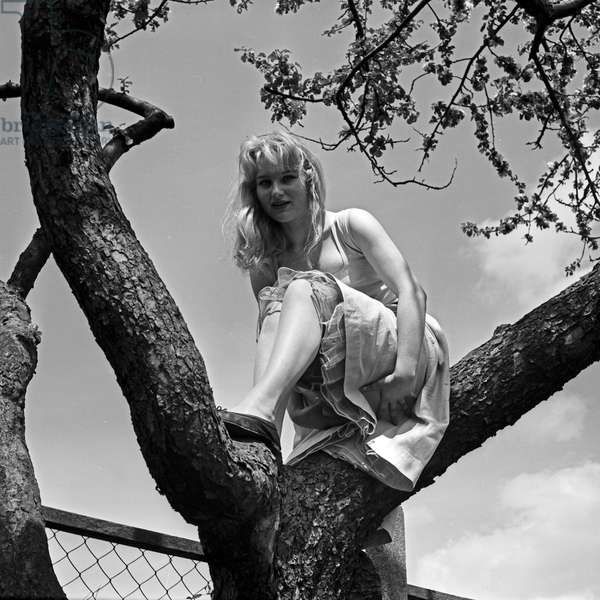 German actress Karin Stoltenfeldt on a tree, Germany 1950s