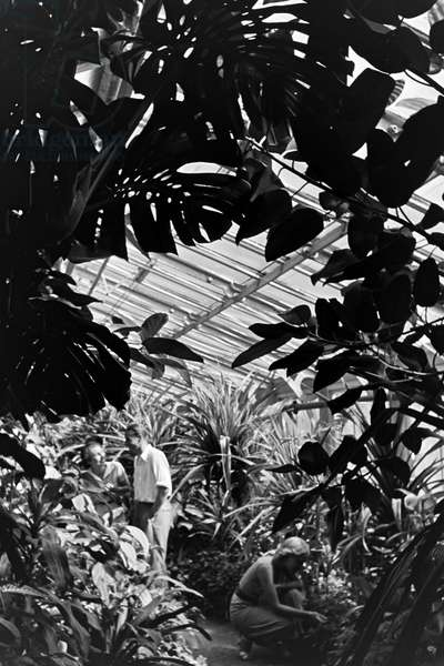 Exotic plants in the botanical garden Wilhelma in Stuttgart, Germany 1930s (b/w photo)