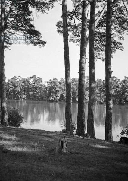 Landscape near Gdansk Heubude, 1930s (b/w photo)