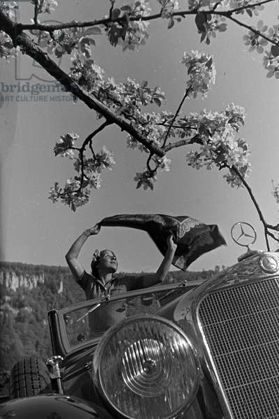 A young woman in a Mercedes-Benz convertible parking under a blooming cherry tree in the Black Forest, Germany 1930s (b/w photo)