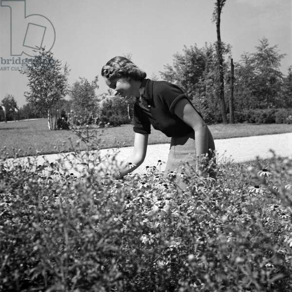 A young woman picking siome flowers at a public garden, Germany 1930s (b/w photo)