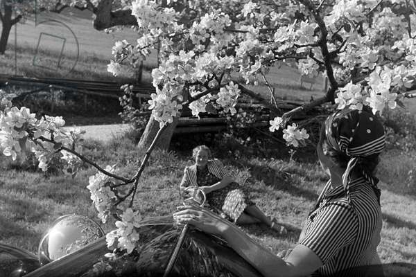Two young women are resting under a blooming cherry tree in the Black Forest during their trip with a convertible, Germany 1930s (b/w photo)