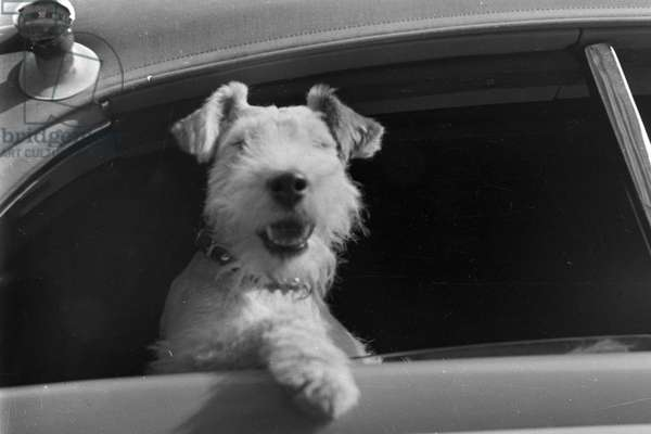 Vacation by car and with the dog, Germany 1930s (b/w photo)