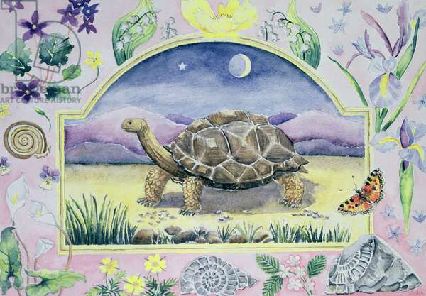 Giant Tortoise (month of May from a calendar)