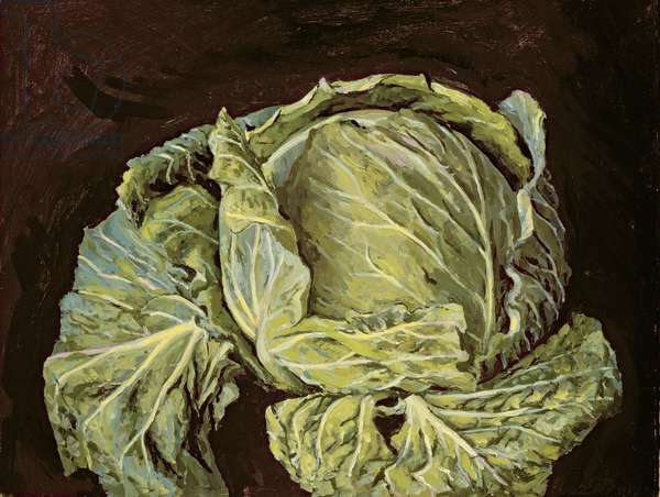 Cabbage Still Life, 2000 (oil on canvas)