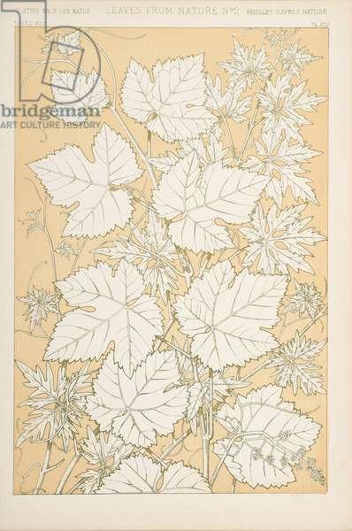 Leaves from Nature, 1868 (chromolitho)