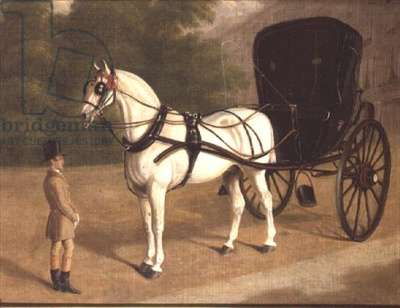 A Grey Horse and Cabriolet with Groom