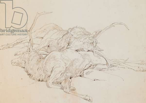 Two Dead Stags, c.1825-30 (pen & ink over pencil on paper)