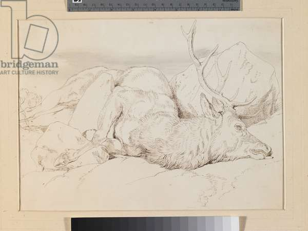 A Dead Stag, c.1825-30 (pen & ink with w/c over pencil on paper)