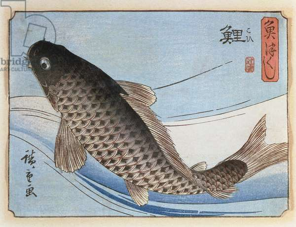A Carp from 'Small Fishes Series', 1830s (woodcut)