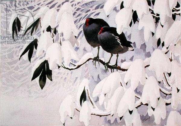 Moorhens in Snow (w/c on paper)