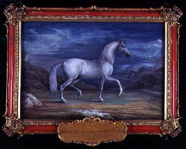 No. 6 A Turkish grey horse of the Spanish Riding School (w/c on paper)