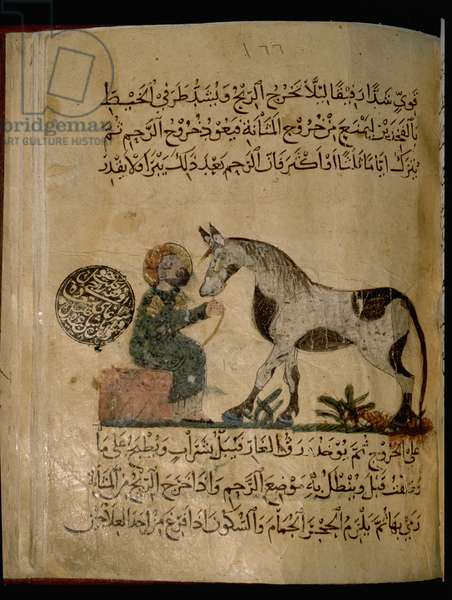 Illustration from Nihayat al-Sul, a Mamluk manual on horsemanship
