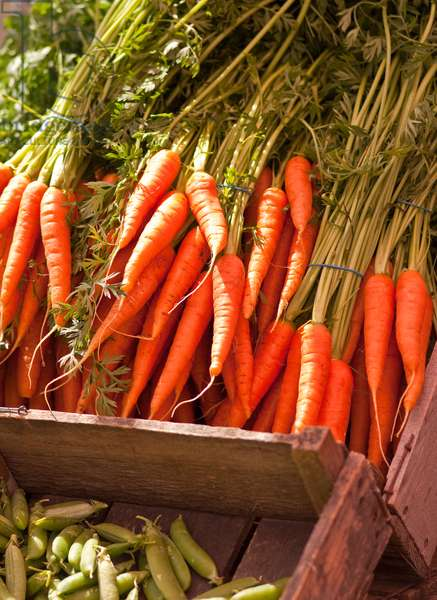 Carrots on market stall (photo)