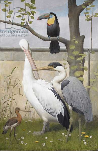 Black and white pelican, cocoi heron, sulphur-breasted toucan and a godwit (oil on canvas)