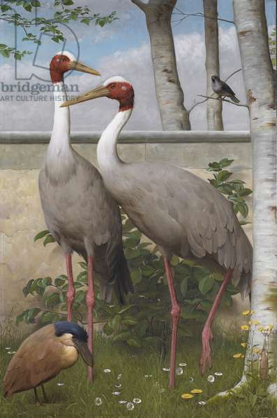 Sarus cranes, boat bill and a sparrow (oil on canvas)