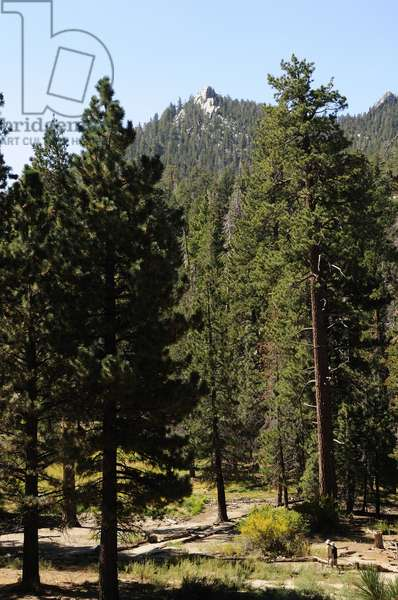 Hikers and trail, Mt San Jacinto State Park in Palm Springs (photo)