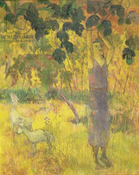 Man Picking Fruit from a Tree, 1897 (oil on canvas)
